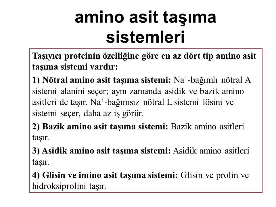 amino asit taşıma sistemleri