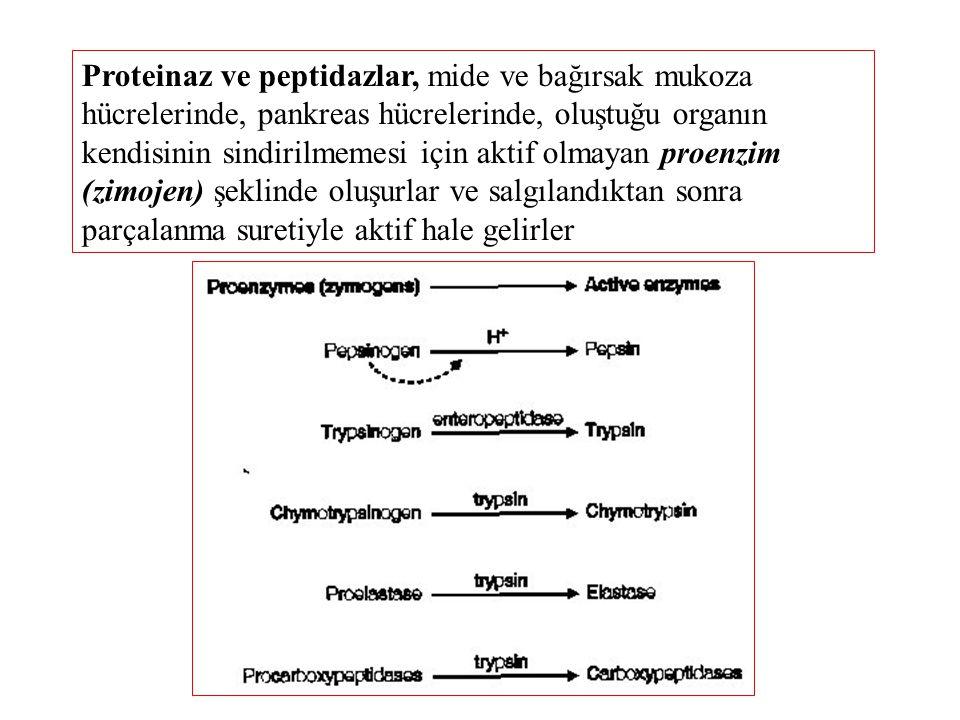 Proteinaz ve peptidazlar, mide ve bağırsak mukoza hücrelerinde, pankreas hücrelerinde, oluştuğu organın kendisinin sindirilmemesi için aktif olmayan proenzim (zimojen) şeklinde oluşurlar ve salgılandıktan sonra parçalanma suretiyle aktif hale gelirler
