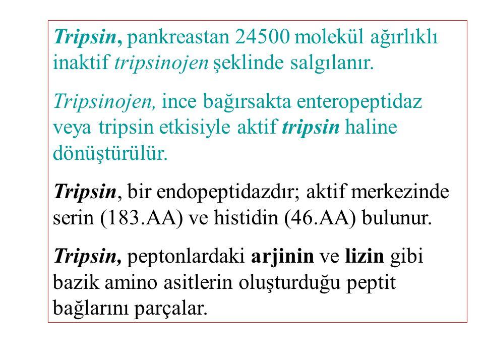 Tripsin, pankreastan 24500 molekül ağırlıklı inaktif tripsinojen şeklinde salgılanır.