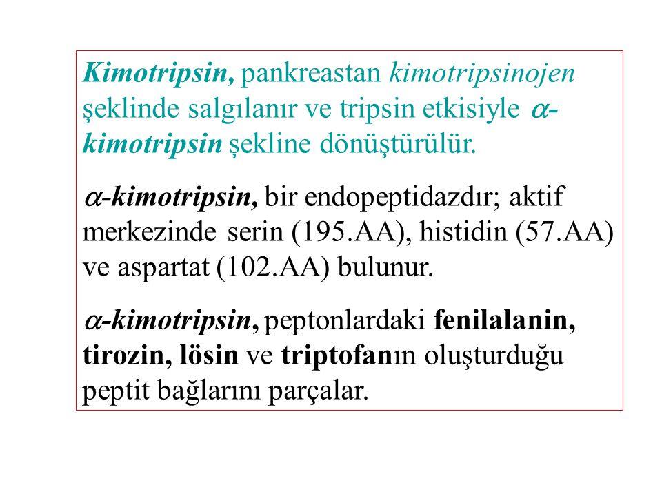 Kimotripsin, pankreastan kimotripsinojen şeklinde salgılanır ve tripsin etkisiyle -kimotripsin şekline dönüştürülür.