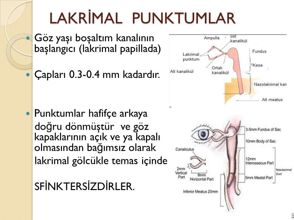 LAKRİMAL PUNKTUMLAR Göz yaşı boşaltım kanalının başlangıcı (lakrimal papillada) Çapları 0.3-0.4 mm kadardır.