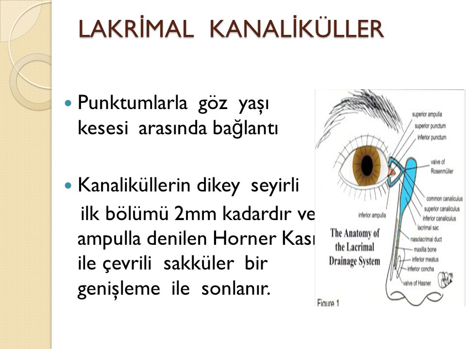 LAKRİMAL KANALİKÜLLER