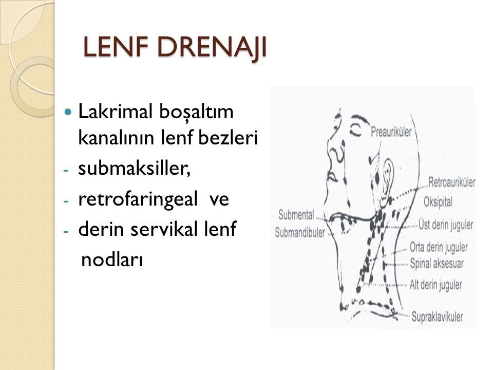 LENF DRENAJI Lakrimal boşaltım kanalının lenf bezleri submaksiller,
