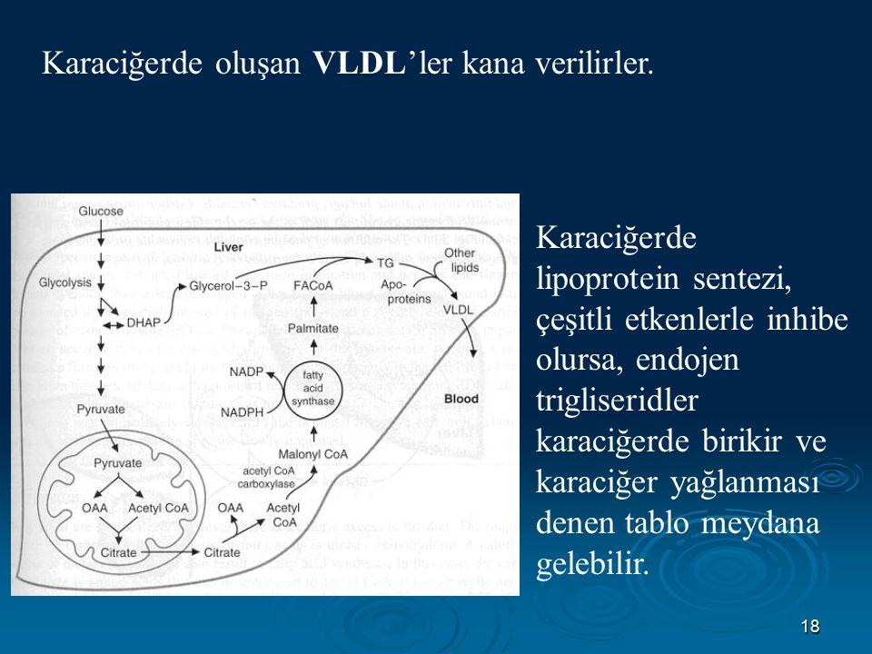 Karaciğerde oluşan VLDL'ler kana verilirler.