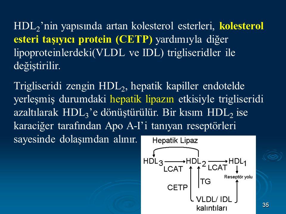 HDL2'nin yapısında artan kolesterol esterleri, kolesterol esteri taşıyıcı protein (CETP) yardımıyla diğer lipoproteinlerdeki(VLDL ve IDL) trigliseridler ile değiştirilir.