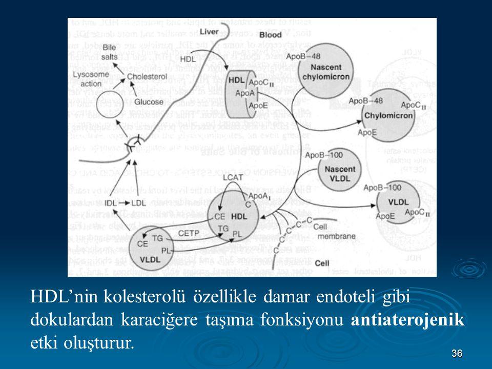 HDL'nin kolesterolü özellikle damar endoteli gibi dokulardan karaciğere taşıma fonksiyonu antiaterojenik etki oluşturur.
