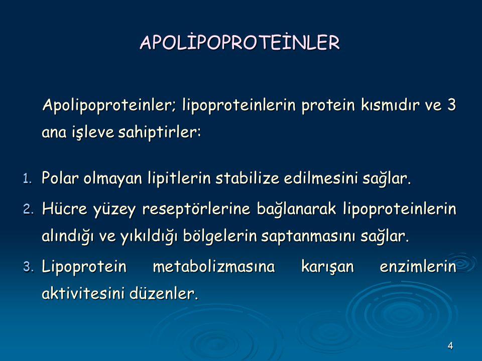 APOLİPOPROTEİNLER Apolipoproteinler; lipoproteinlerin protein kısmıdır ve 3 ana işleve sahiptirler: