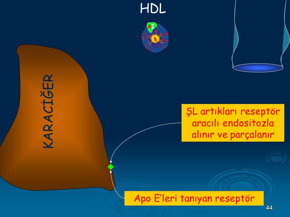 B48 E. CII. HDL. AI. KARACİĞER. ŞL artıkları reseptör aracılı endositozla alınır ve parçalanır.