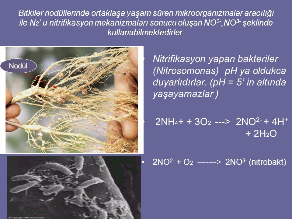 2NH4+ + 3O2 ---> 2NO2- + 4H+ + 2H2O