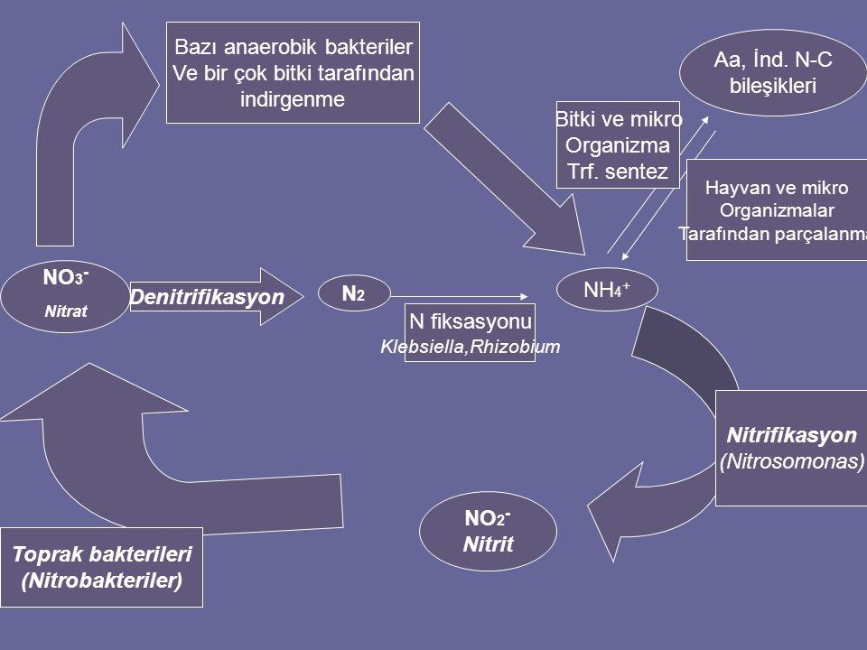 Nitrat Bazı anaerobik bakteriler Aa, İnd. N-C