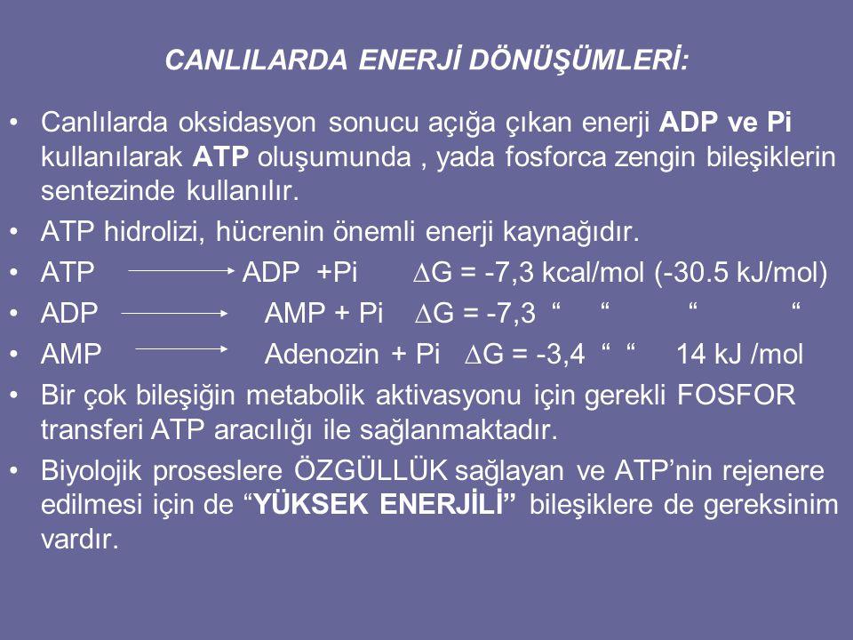 CANLILARDA ENERJİ DÖNÜŞÜMLERİ: