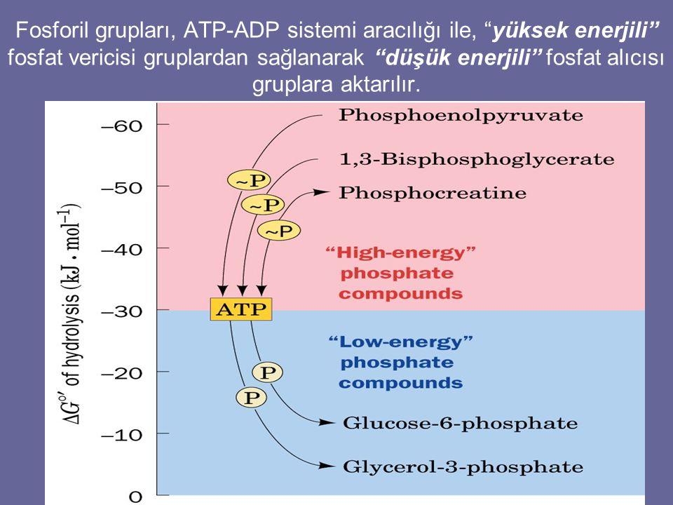Fosforil grupları, ATP-ADP sistemi aracılığı ile, yüksek enerjili fosfat vericisi gruplardan sağlanarak düşük enerjili fosfat alıcısı gruplara aktarılır.