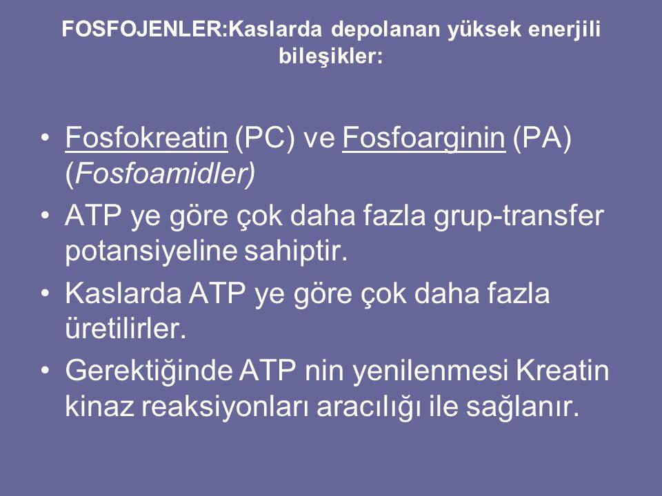 FOSFOJENLER:Kaslarda depolanan yüksek enerjili bileşikler: