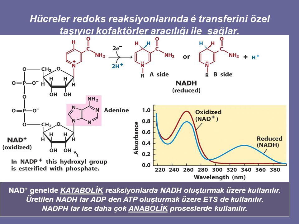 Hücreler redoks reaksiyonlarında é transferini özel taşıyıcı kofaktörler aracılığı ile sağlar.
