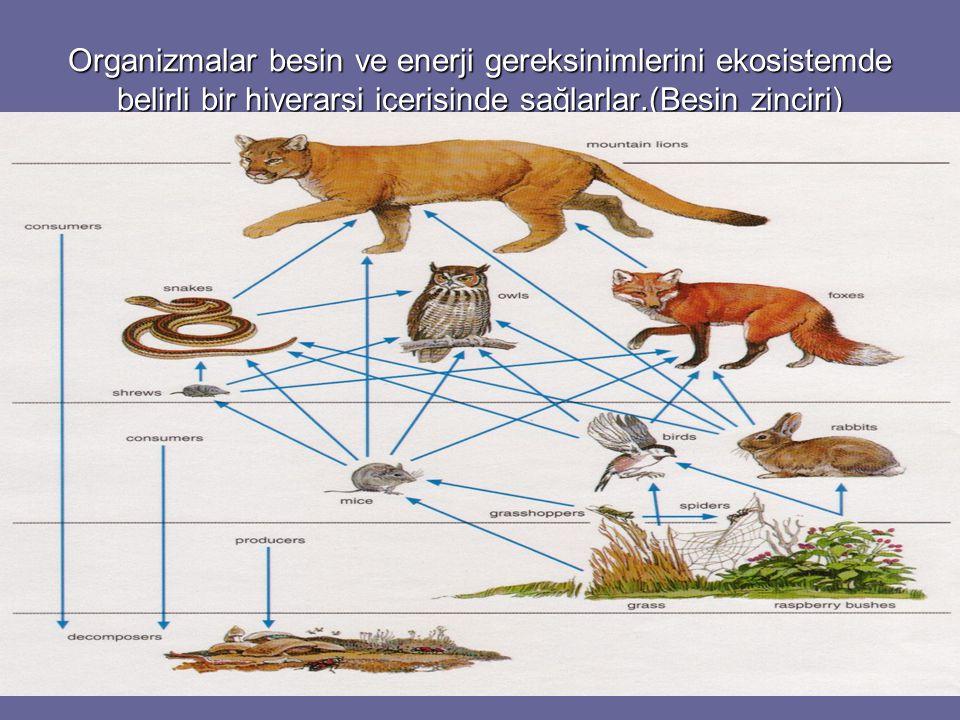 Organizmalar besin ve enerji gereksinimlerini ekosistemde belirli bir hiyerarşi içerisinde sağlarlar.(Besin zinciri)