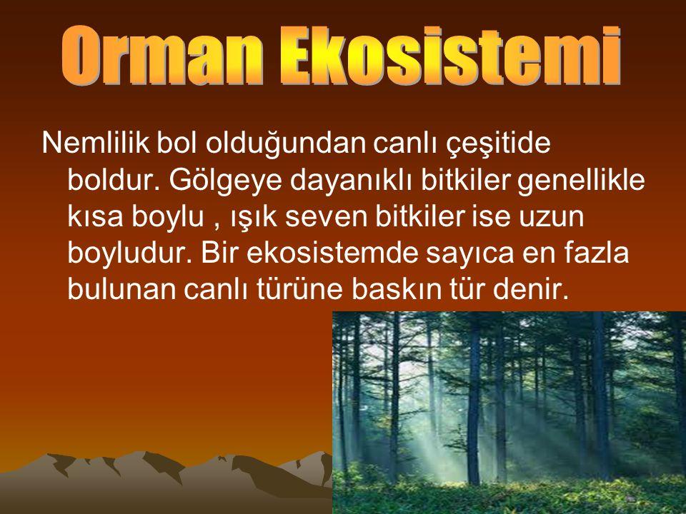 Orman Ekosistemi