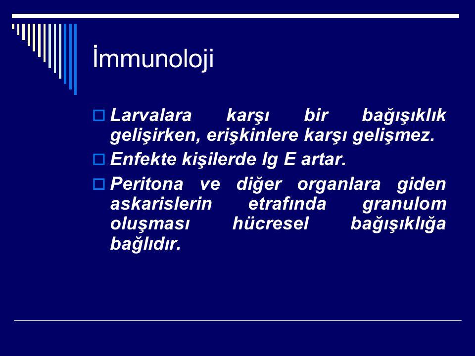İmmunoloji Larvalara karşı bir bağışıklık gelişirken, erişkinlere karşı gelişmez. Enfekte kişilerde Ig E artar.