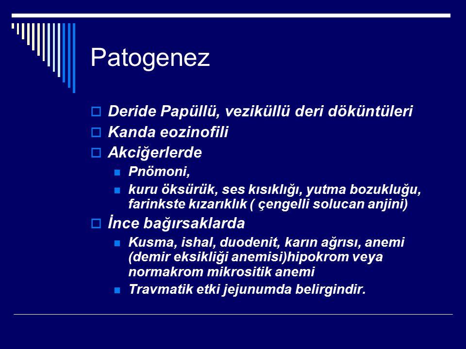 Patogenez Deride Papüllü, veziküllü deri döküntüleri Kanda eozinofili
