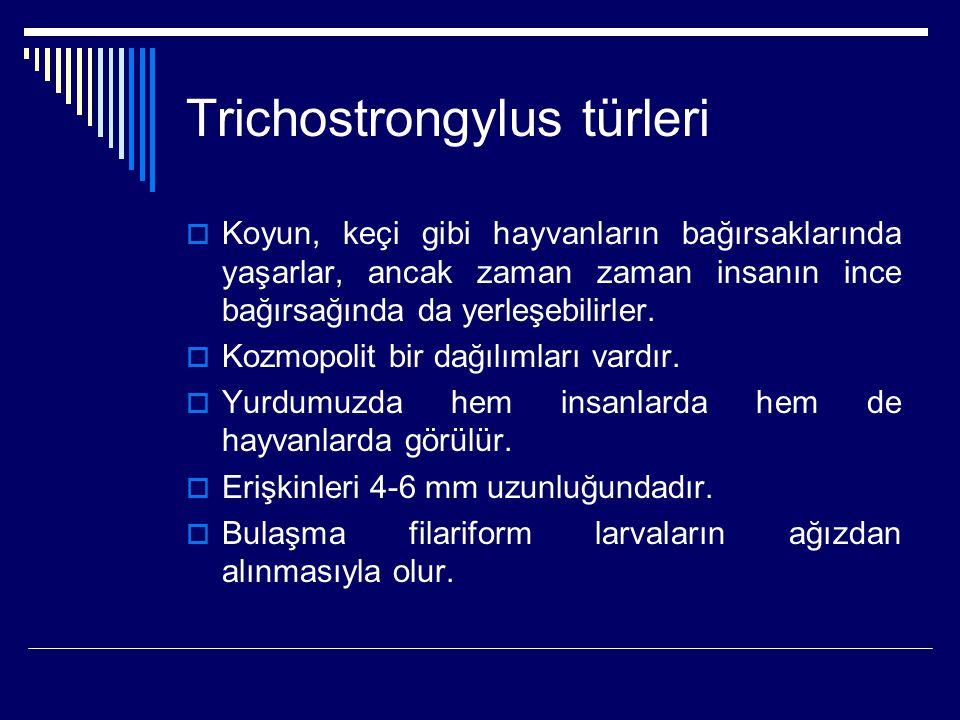 Trichostrongylus türleri