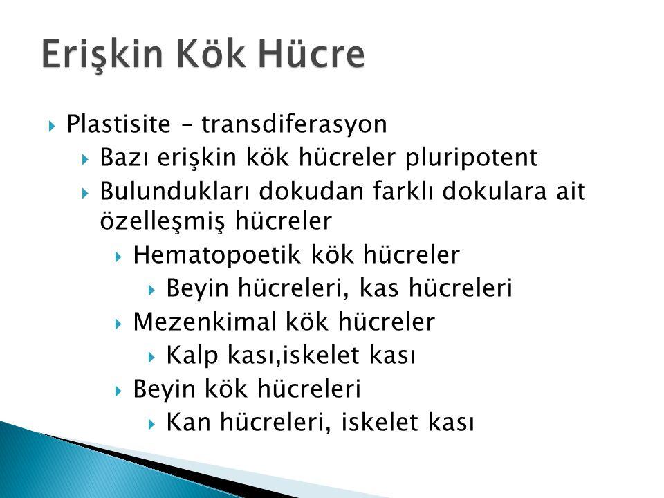 Erişkin Kök Hücre Plastisite – transdiferasyon