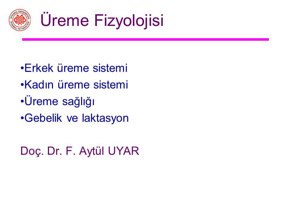 Üreme Fizyolojisi Erkek üreme sistemi Kadın üreme sistemi