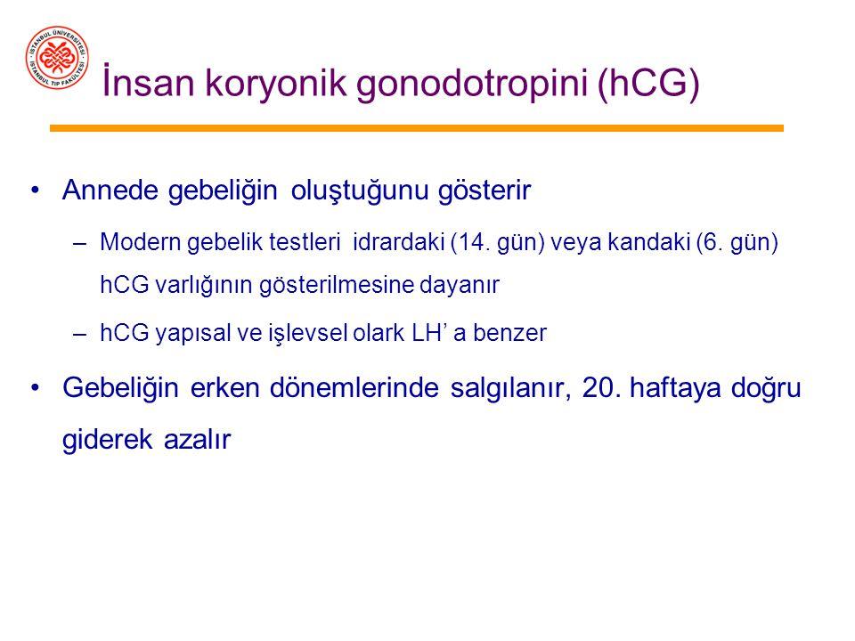 İnsan koryonik gonodotropini (hCG)