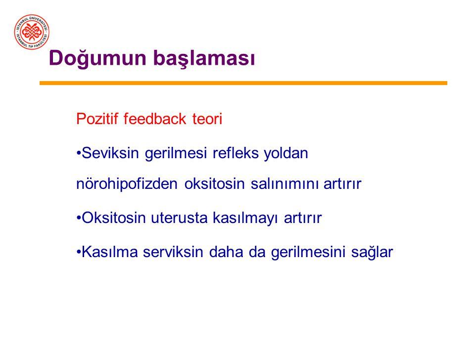 Doğumun başlaması Pozitif feedback teori