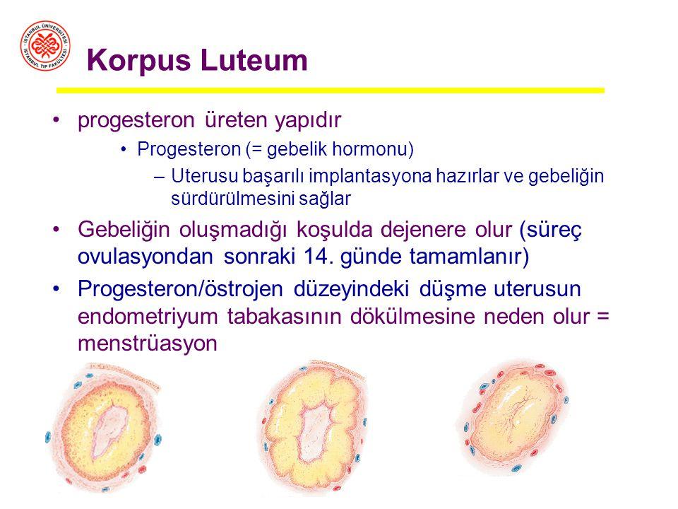 Korpus Luteum progesteron üreten yapıdır