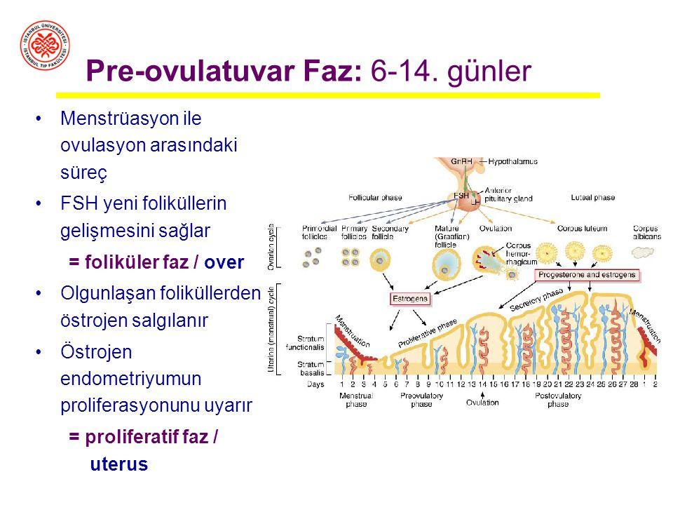 Pre-ovulatuvar Faz: 6-14. günler