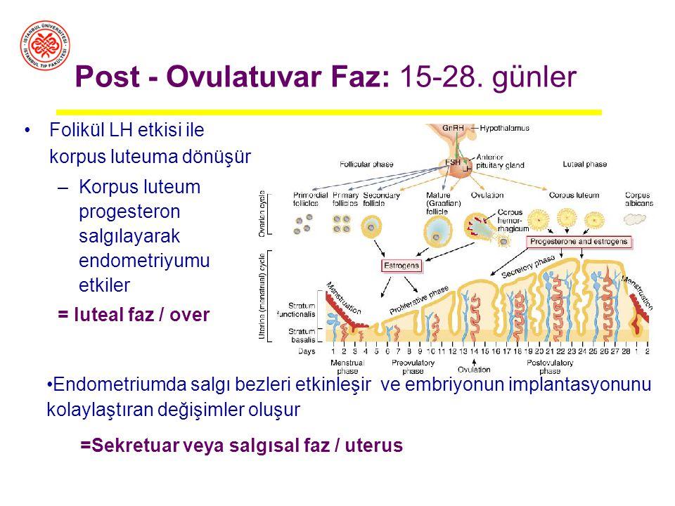 Post - Ovulatuvar Faz: 15-28. günler