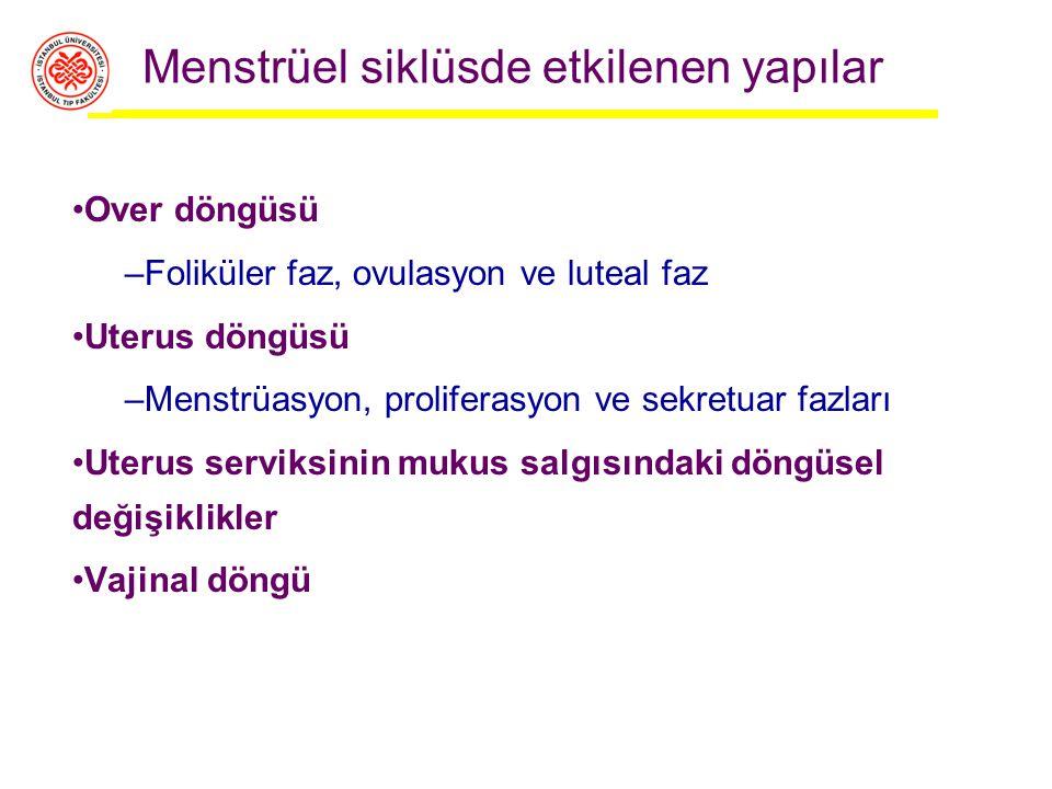 Menstrüel siklüsde etkilenen yapılar