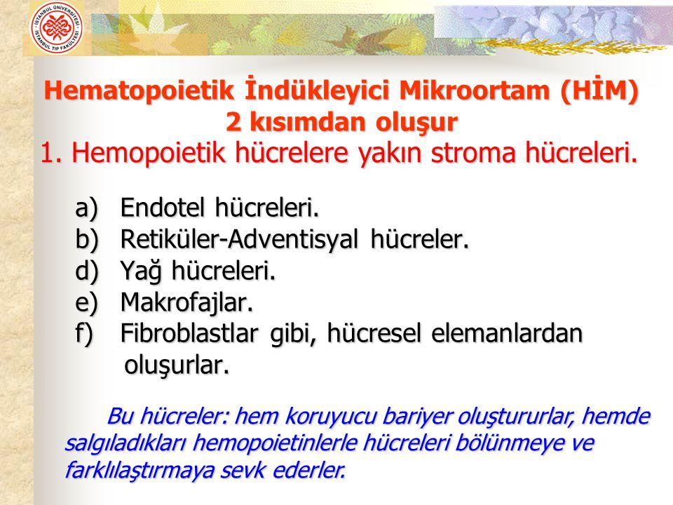 Hematopoietik İndükleyici Mikroortam (HİM) 2 kısımdan oluşur