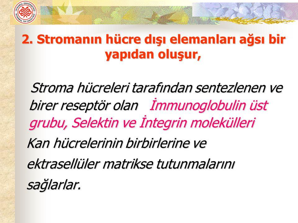2. Stromanın hücre dışı elemanları ağsı bir yapıdan oluşur,