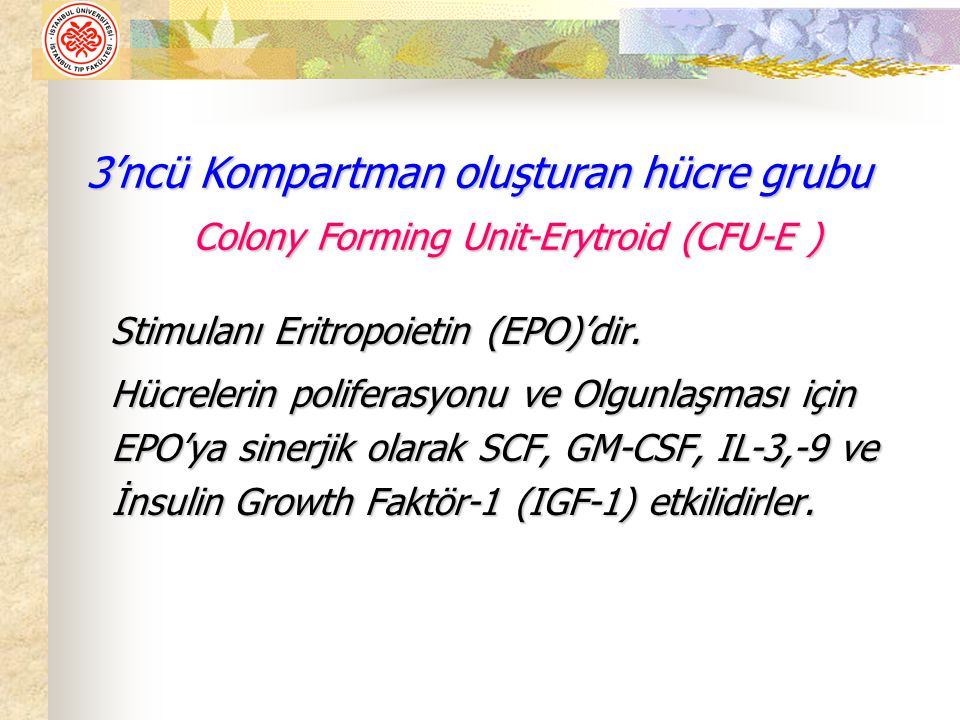 Colony Forming Unit-Erytroid (CFU-E )