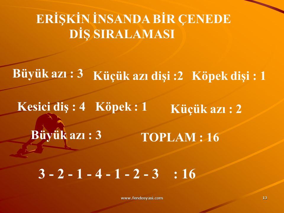 3 - 2 - 1 - 4 - 1 - 2 - 3 : 16 Büyük azı : 3 Küçük azı dişi :2