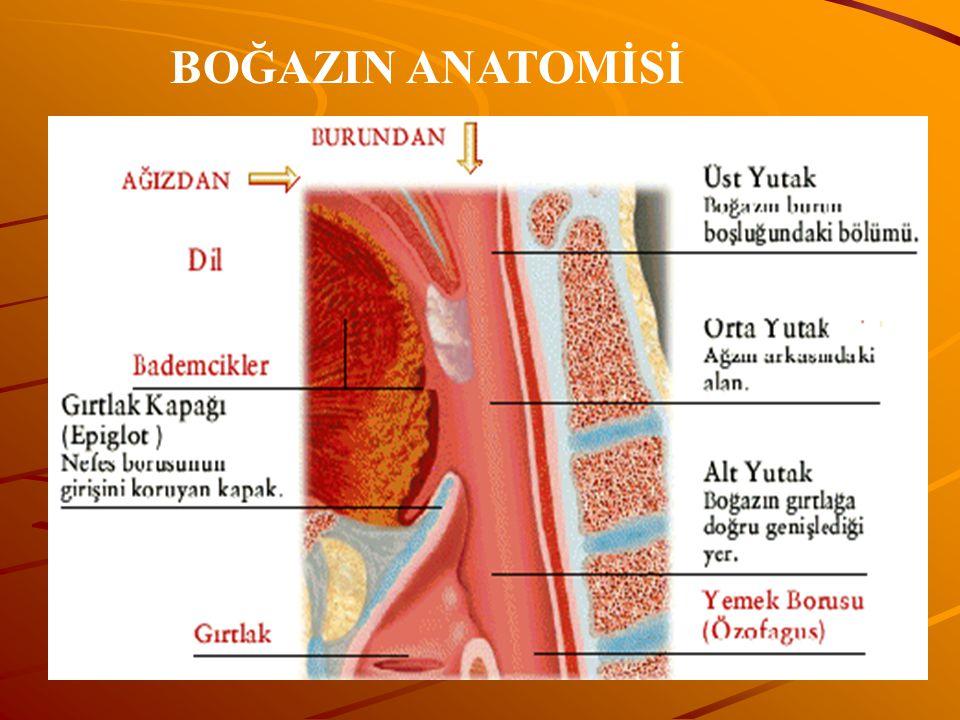 BOĞAZIN ANATOMİSİ www.fendosyasi.com