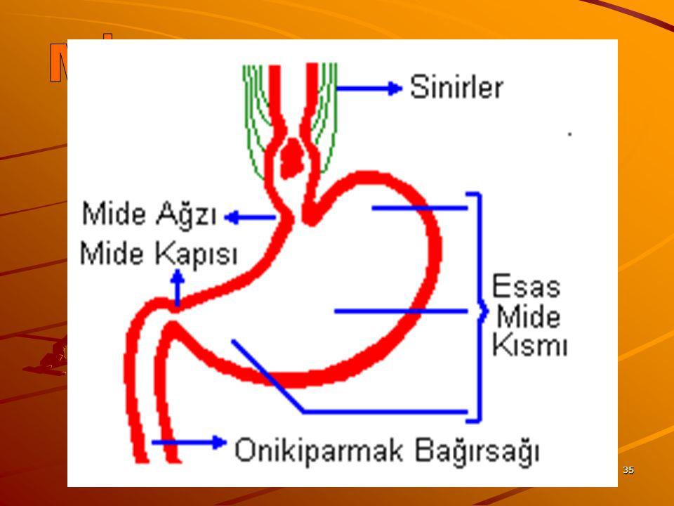 MİDE www.fendosyasi.com