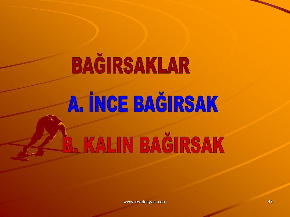 BAĞIRSAKLAR A. İNCE BAĞIRSAK B. KALIN BAĞIRSAK www.fendosyasi.com