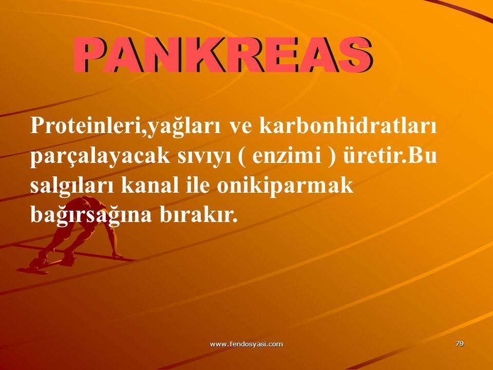 PANKREAS Proteinleri,yağları ve karbonhidratları parçalayacak sıvıyı ( enzimi ) üretir.Bu salgıları kanal ile onikiparmak bağırsağına bırakır.