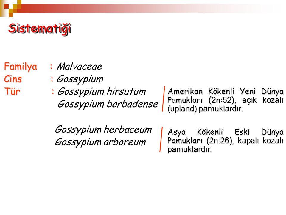 Sistematiği Familya : Malvaceae Cins : Gossypium
