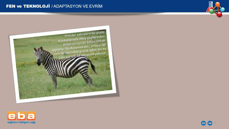 FEN ve TEKNOLOJİ / ADAPTASYON VE EVRİM