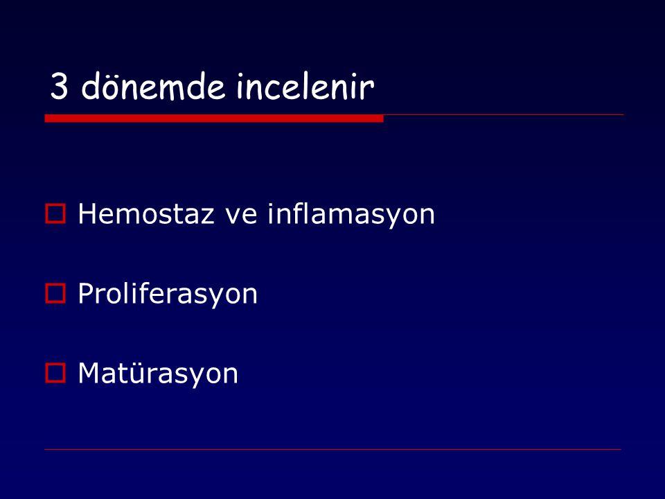 3 dönemde incelenir Hemostaz ve inflamasyon Proliferasyon Matürasyon