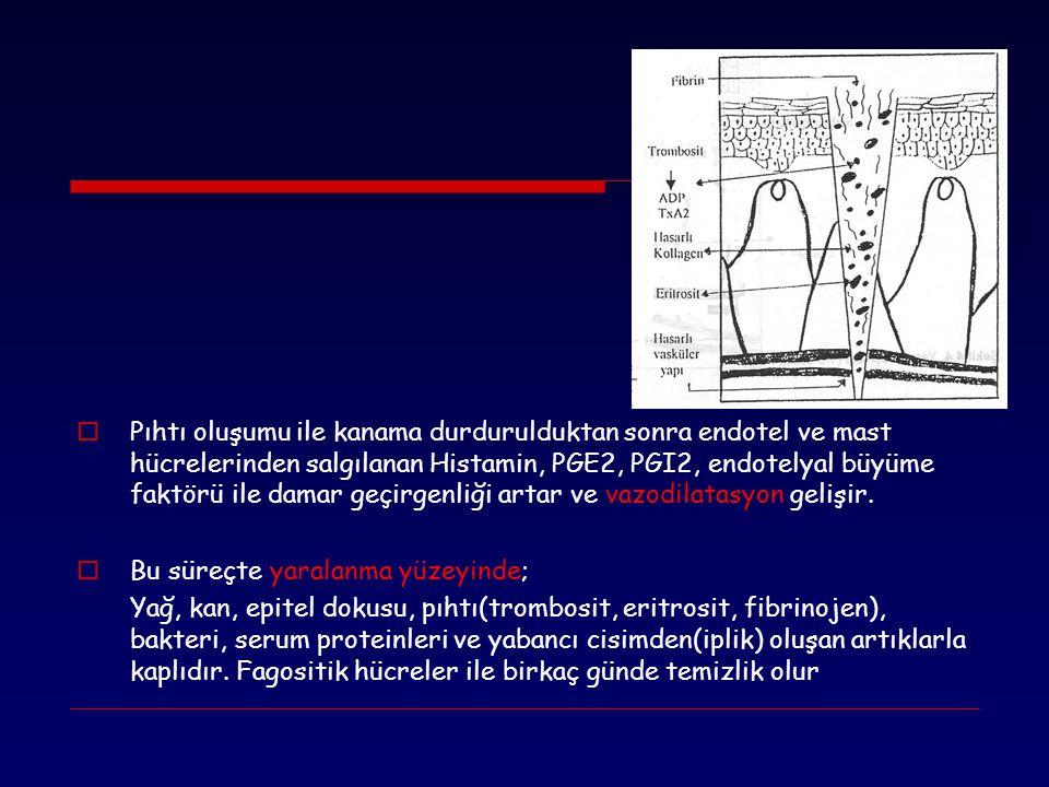 Pıhtı oluşumu ile kanama durdurulduktan sonra endotel ve mast hücrelerinden salgılanan Histamin, PGE2, PGI2, endotelyal büyüme faktörü ile damar geçirgenliği artar ve vazodilatasyon gelişir.
