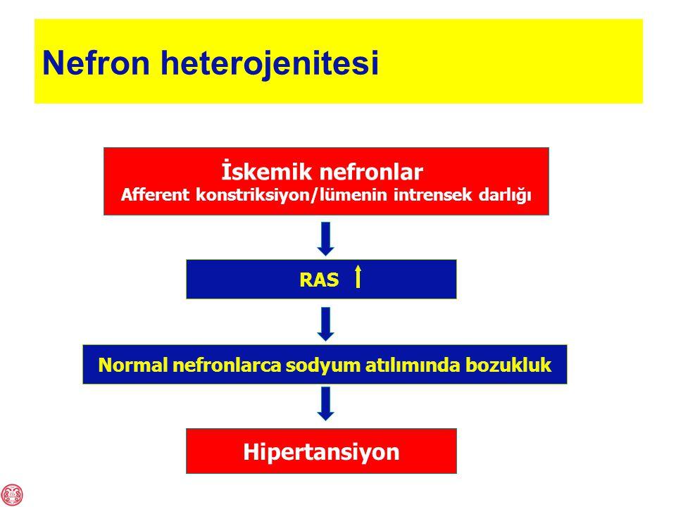 Nefron heterojenitesi