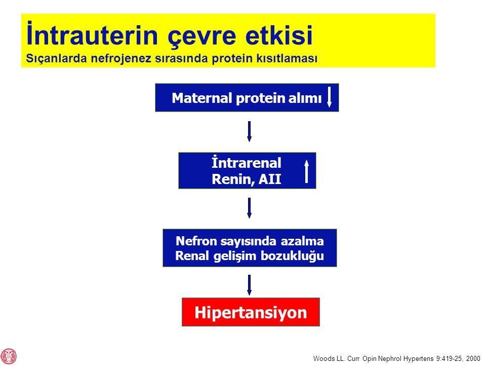 Maternal protein alımı Nefron sayısında azalma Renal gelişim bozukluğu