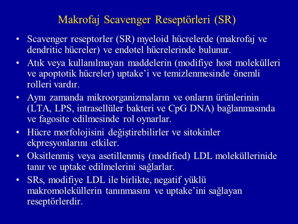 Makrofaj Scavenger Reseptörleri (SR)