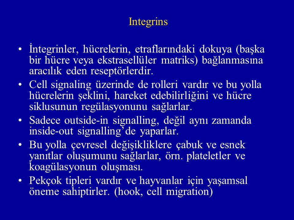 Integrins İntegrinler, hücrelerin, etraflarındaki dokuya (başka bir hücre veya ekstrasellüler matriks) bağlanmasına aracılık eden reseptörlerdir.