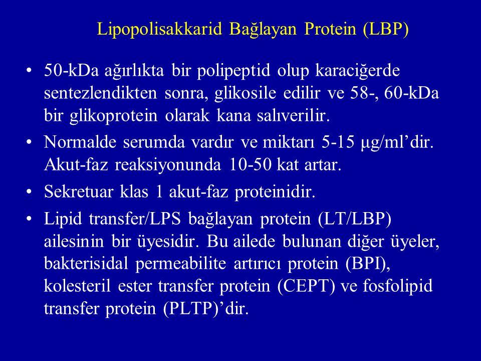 Lipopolisakkarid Bağlayan Protein (LBP)