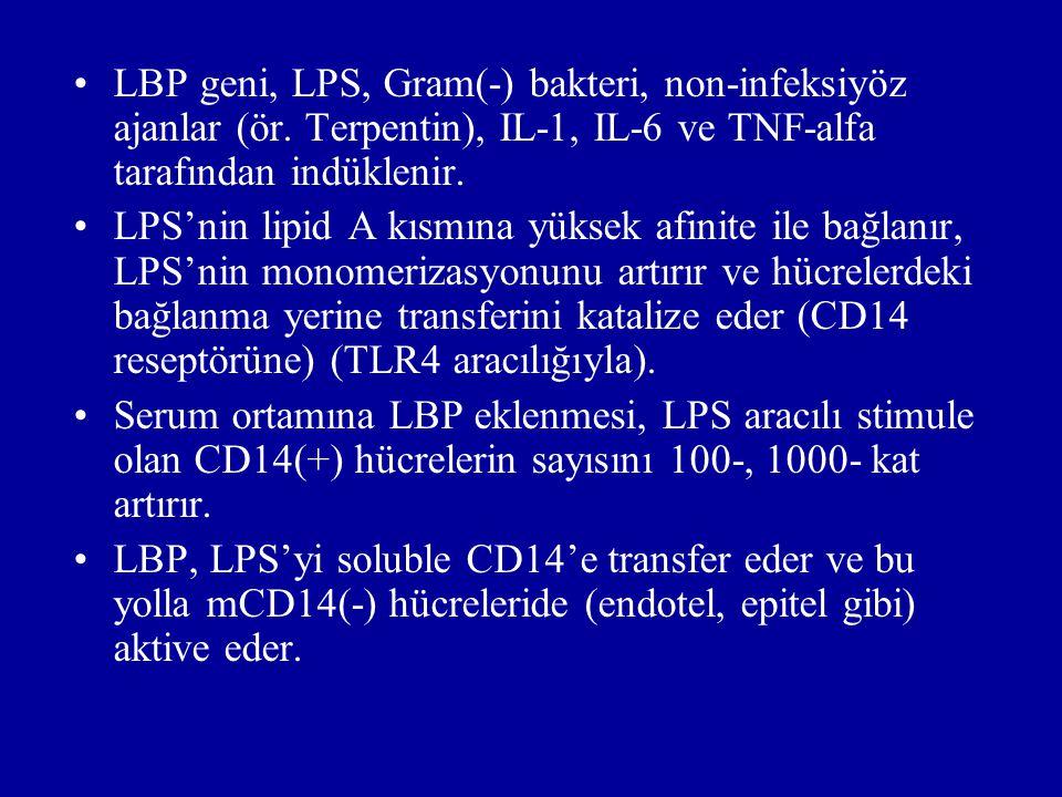 LBP geni, LPS, Gram(-) bakteri, non-infeksiyöz ajanlar (ör