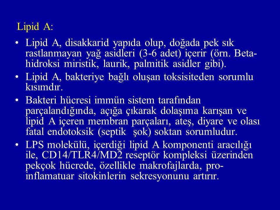 Lipid A: